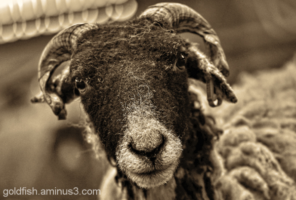 Earth Trust Lambing Weekend 5/8
