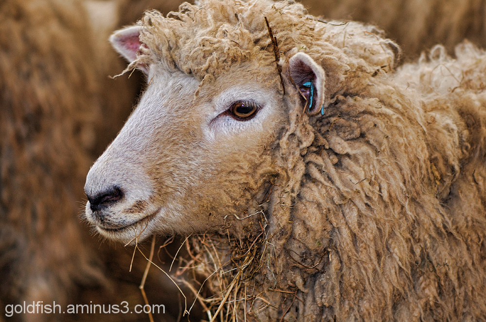 Earth Trust Lambing Weekend 6/8