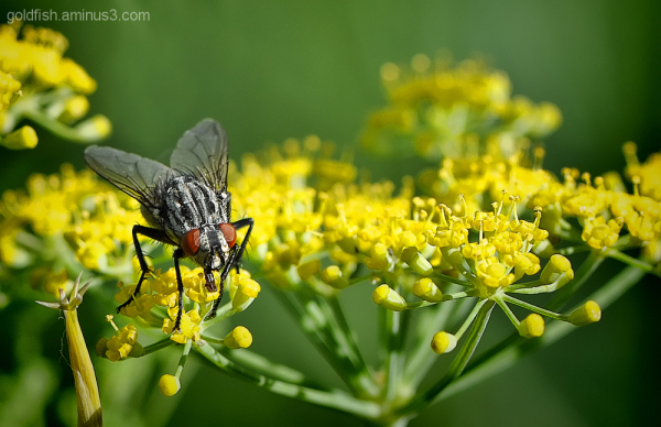 Insects & Flowers 4/6