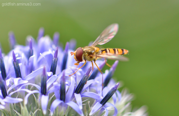Insects & Flowers 6/6