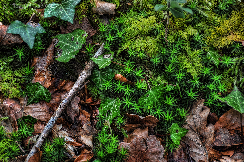 Forest Floor Foliage