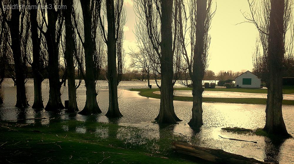 Abbey Meadows Underwater