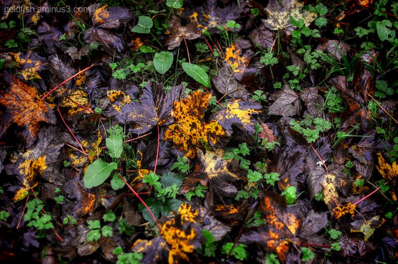 Autumn Colour 1/9