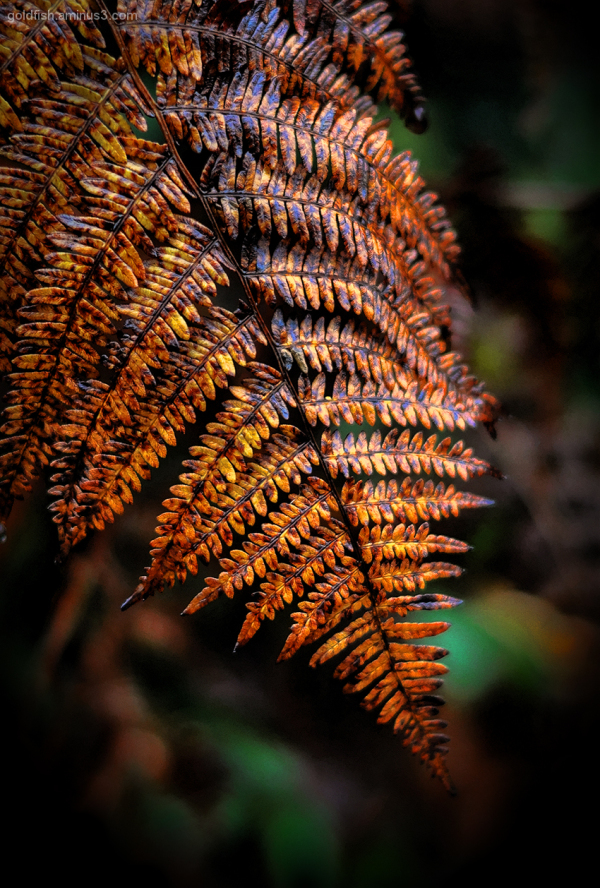 Autumn Colour 2/9