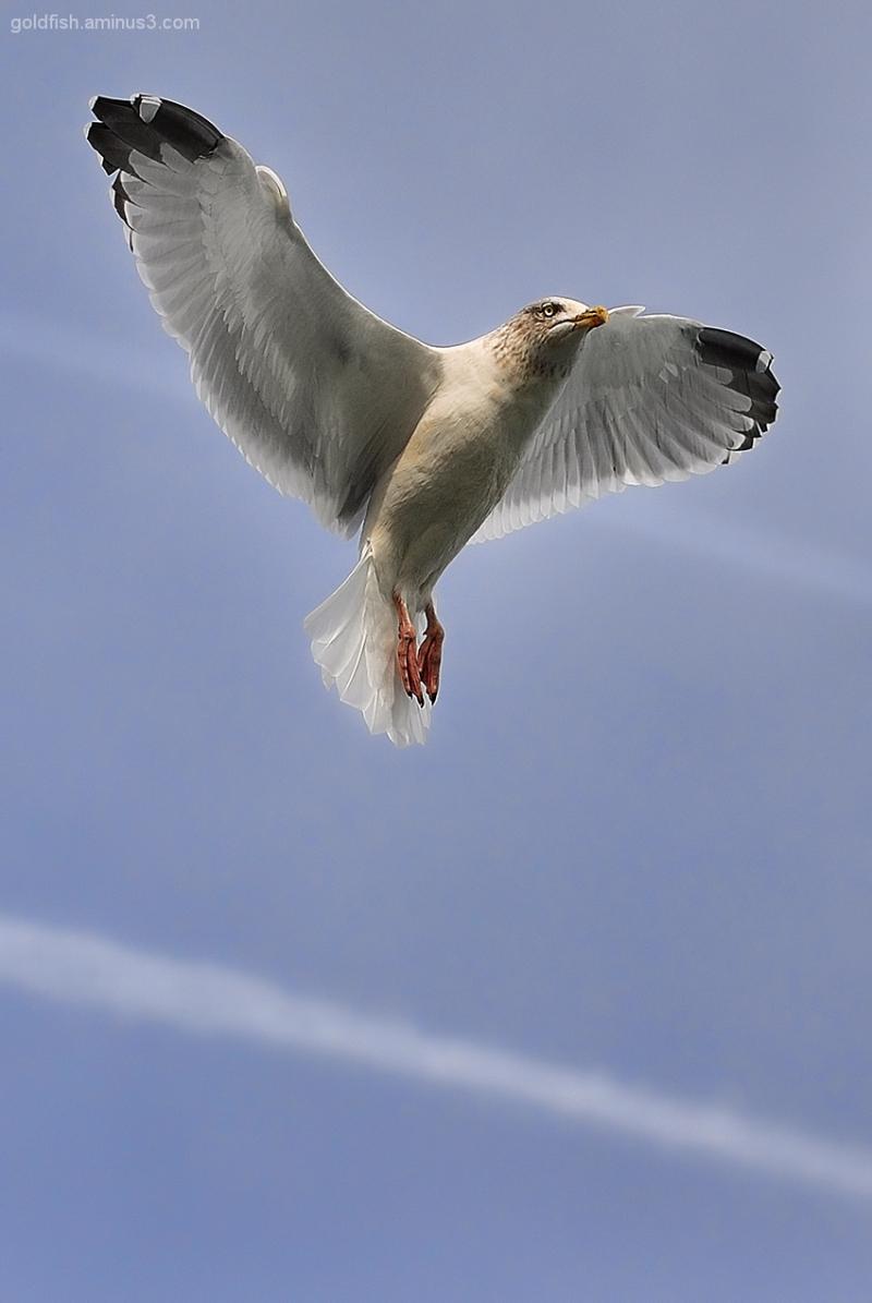 Birds In Flight 1/3