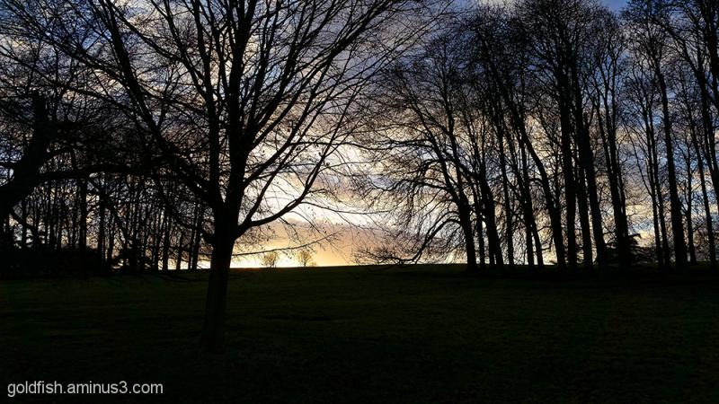 Blenheim Sunsets 1/3