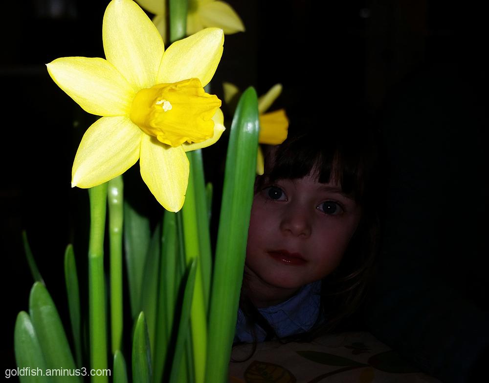 Daffodil Peek