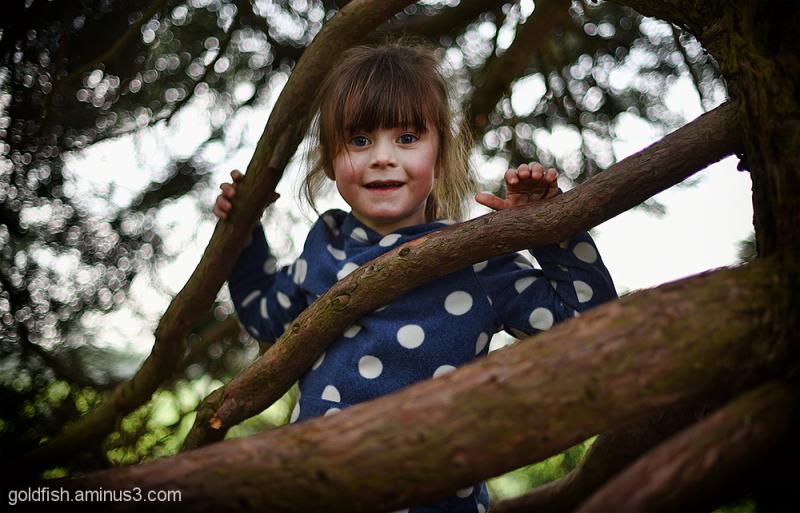 Tree People 1/2