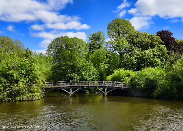 Thames @ Windsor 1/3 Long Bridge