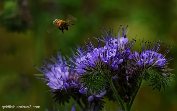 The Bee & the Unknown Flower