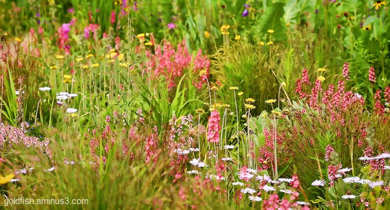 Summer Garden 2/4