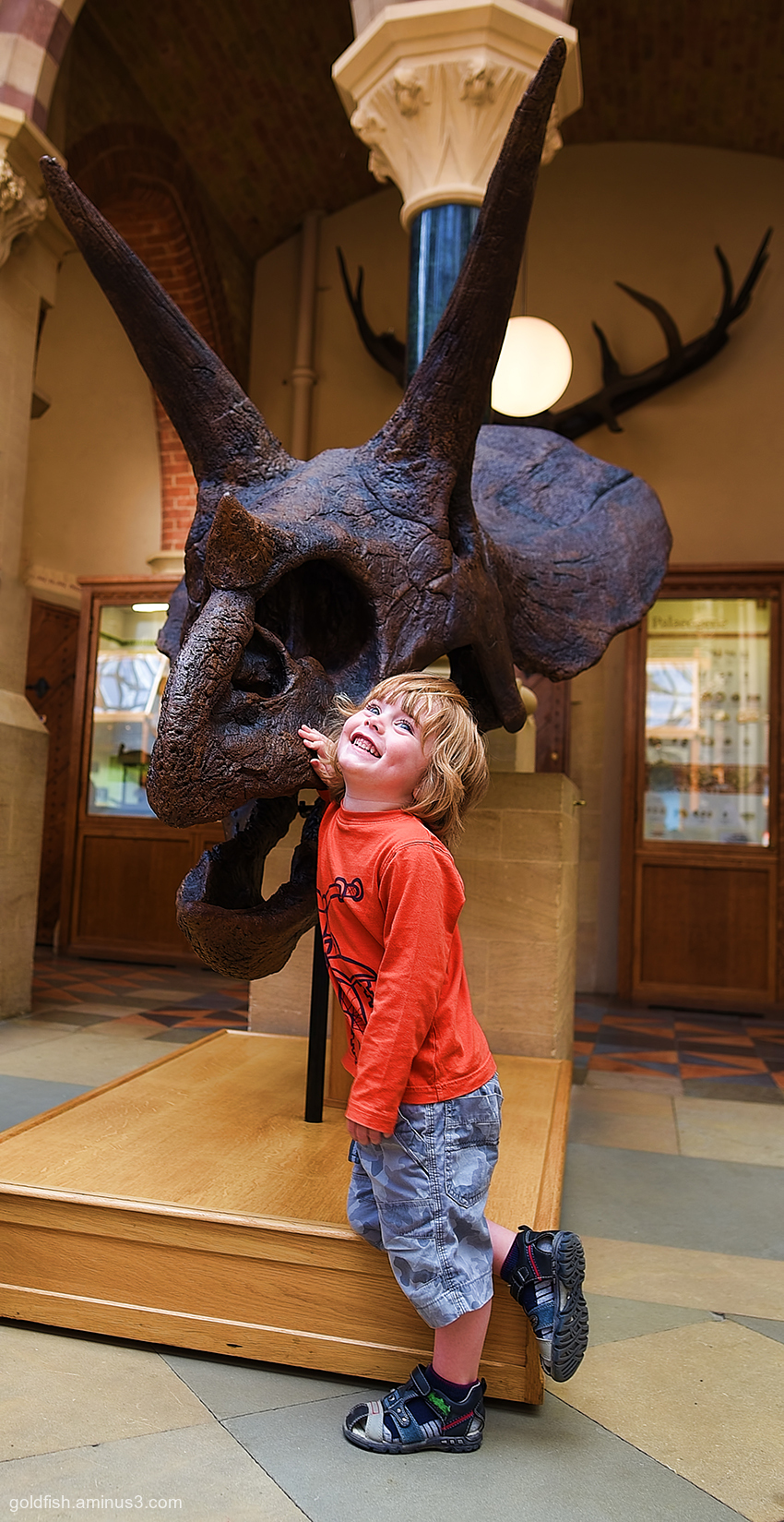 Gethin & The Triceratops