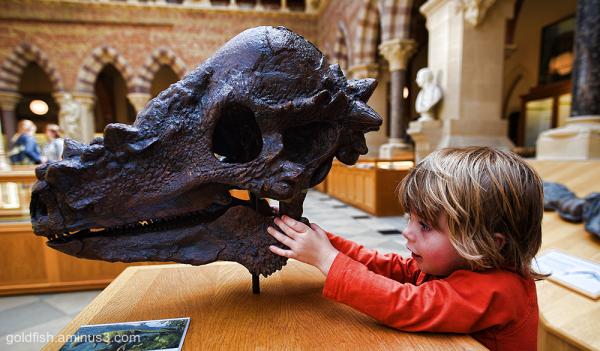 Gethin & The Pachycephalosaurus