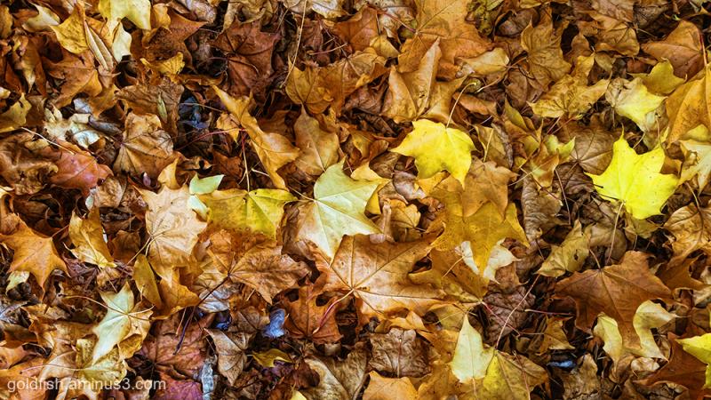 Autumn Arrived