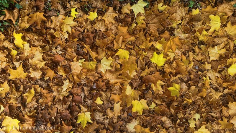 Autumn Arrived ii