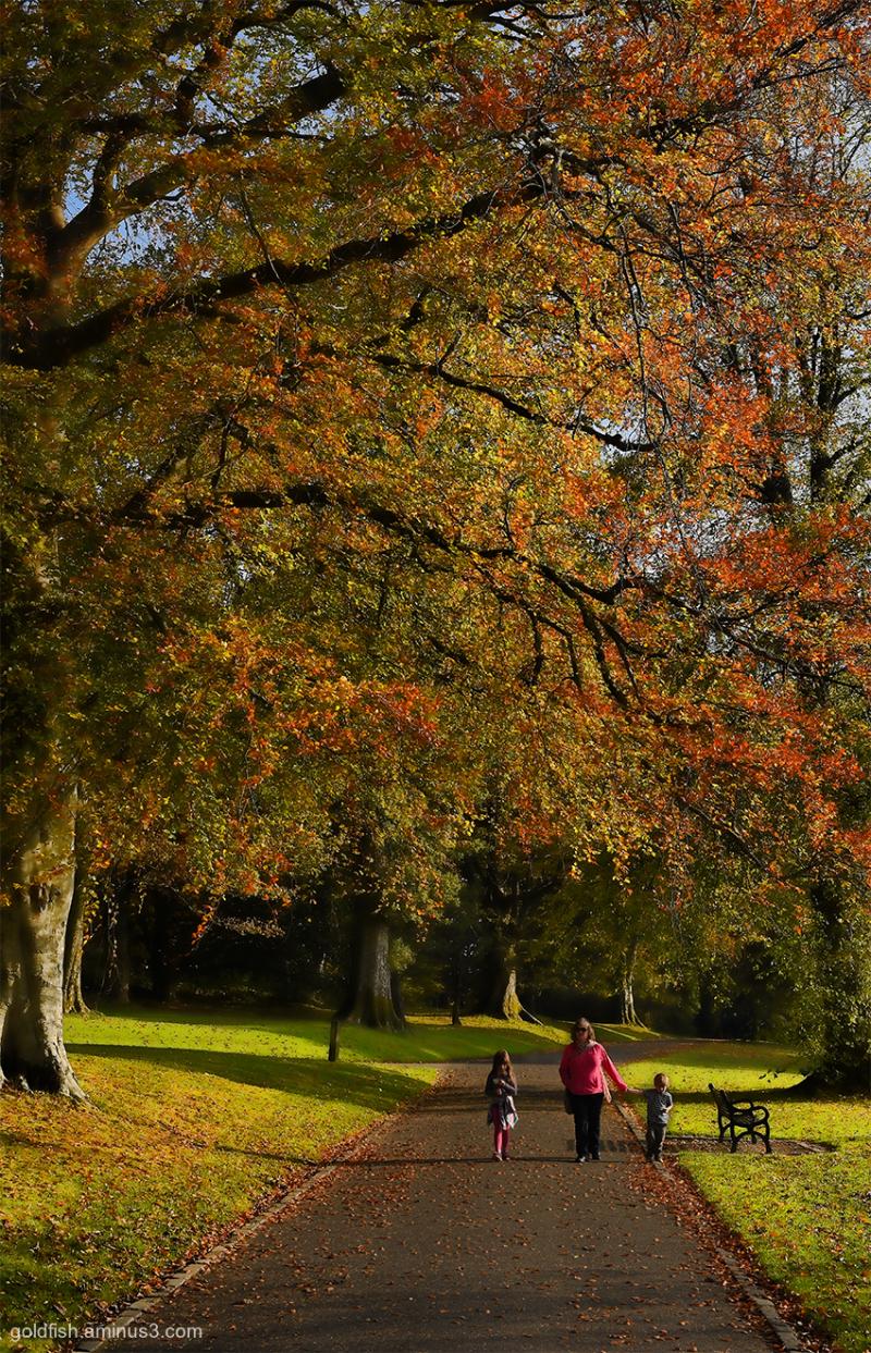 Balloch Castle View iii
