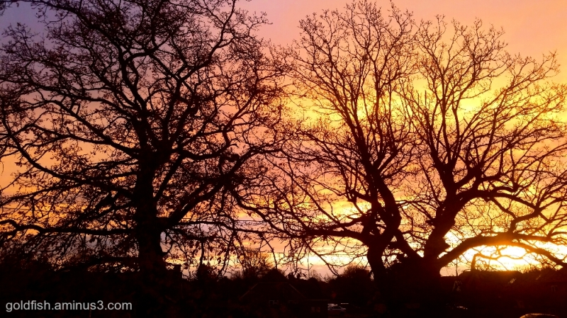 Oak Tree Sunrise