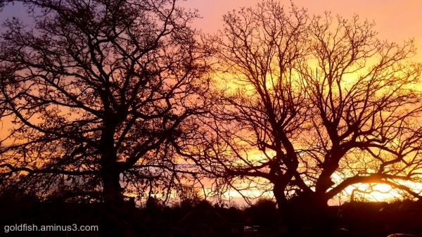 Oak Tree Sunrise