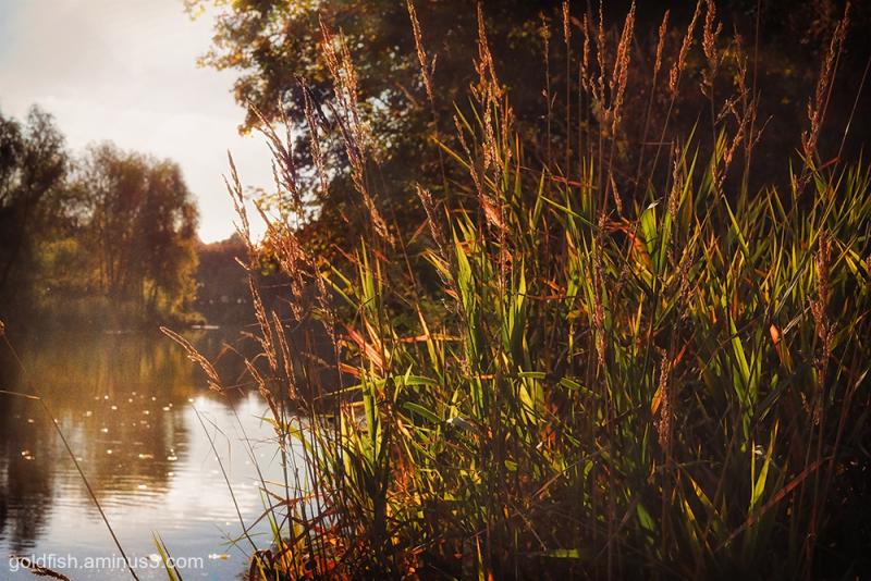 River Eden - Carlisle iii