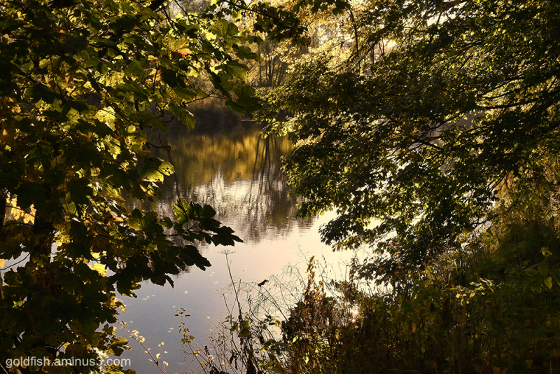 River Eden - Carlisle iv