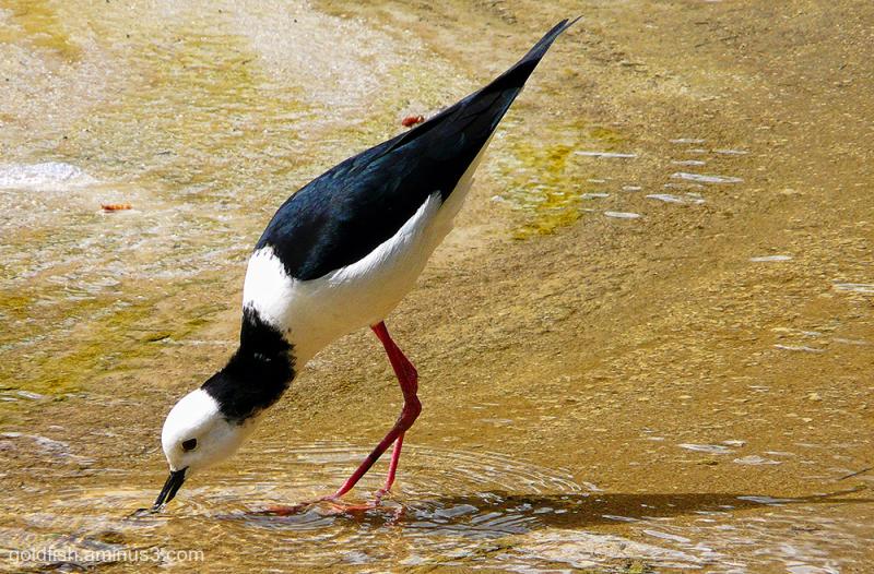 Wai-O-Tapu - Sacred Waters - Thermal Park xii
