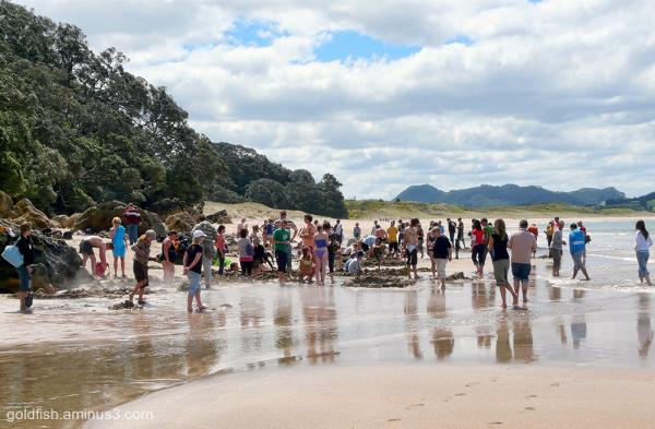 Hot Water Beach ii