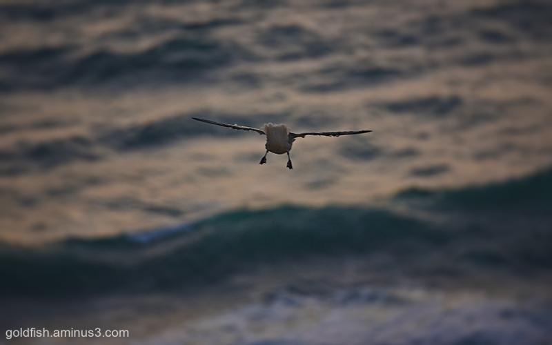 Bedruthan Flight ii
