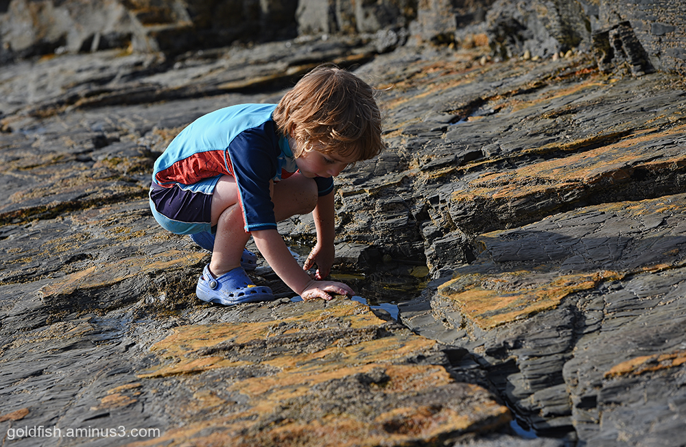 Harlyn Bay Rock Pooling