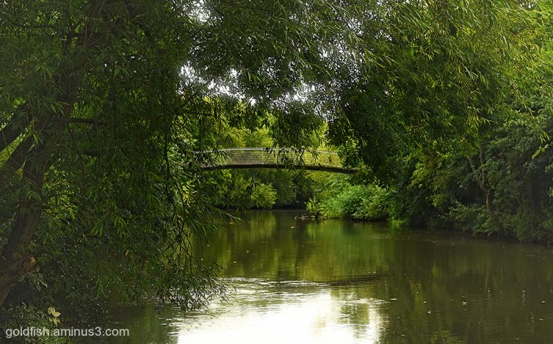 Wolfson College Bridge