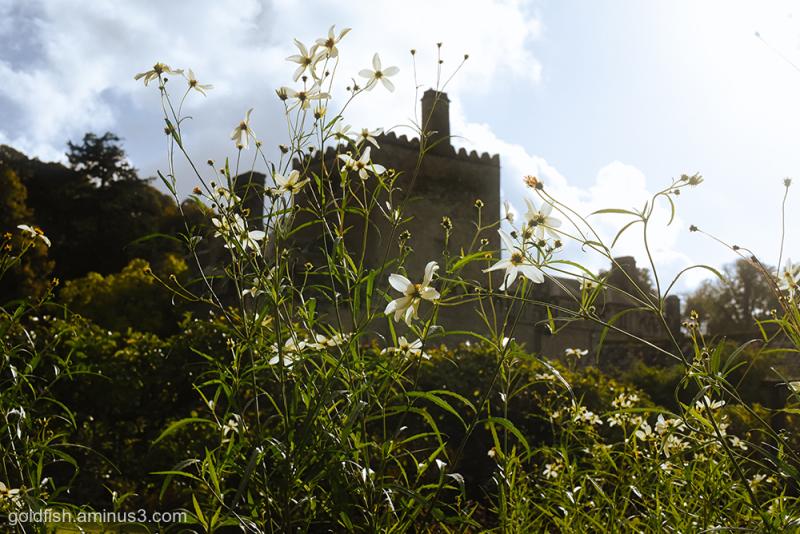 Buckland Abbey vii