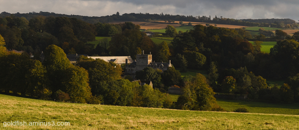 Buckland Abbey viii