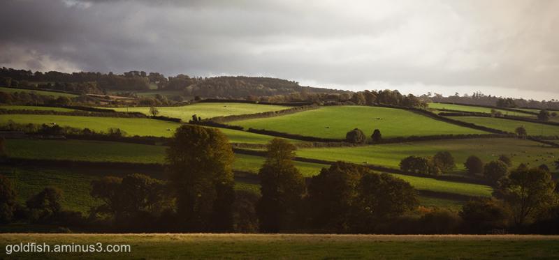 Buckland Abbey x