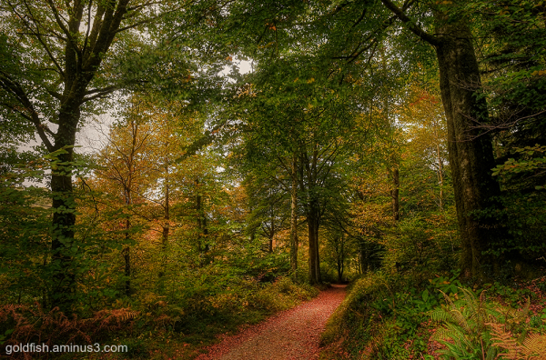 Autumn Leaves iii