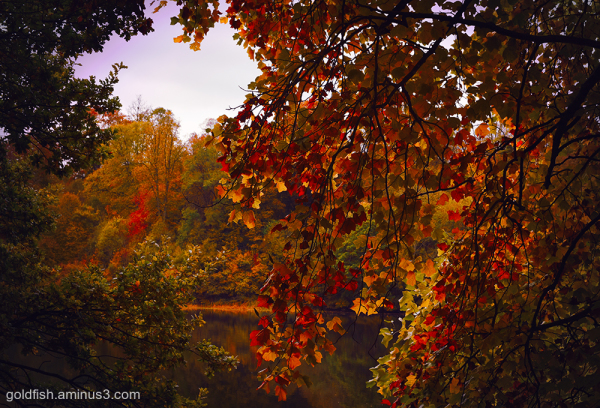Autumn Leaves xi
