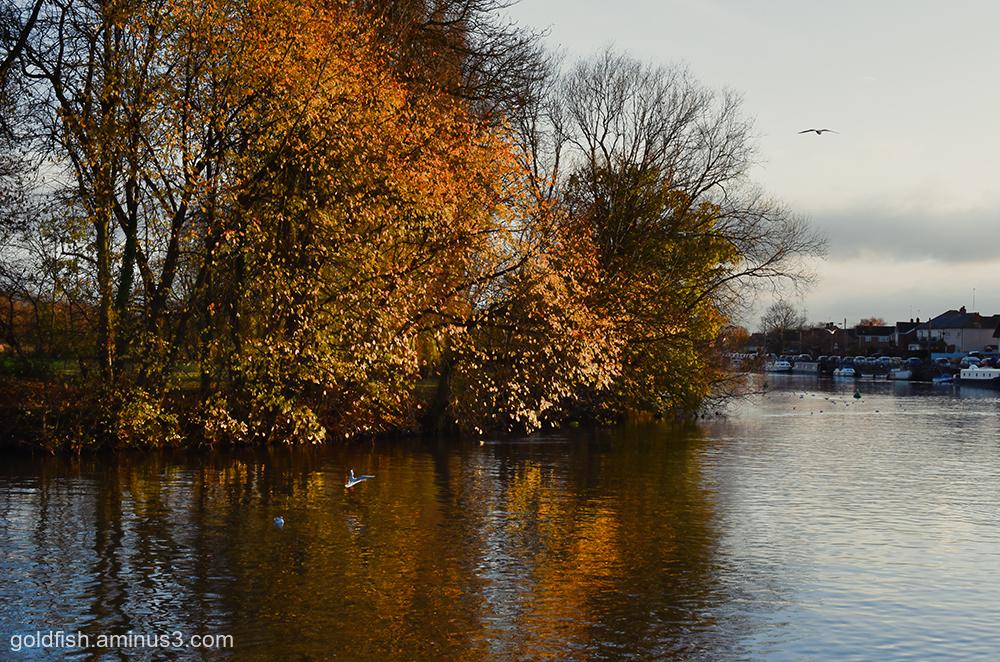 River Thames @ Abingdon