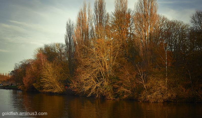 River Thames @ Abingdon iii