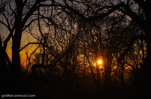 Sunlight & Silhouettes iii