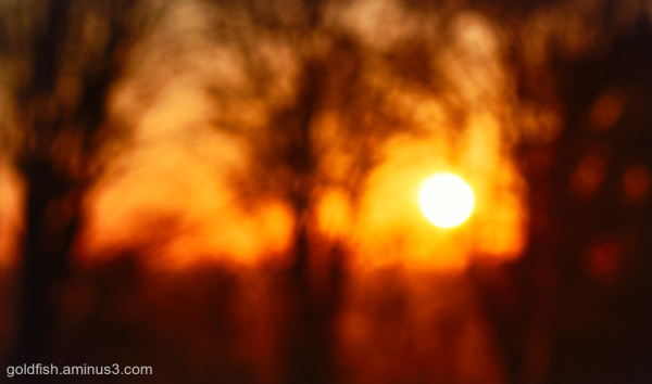 Sunlight & Silhouettes iv