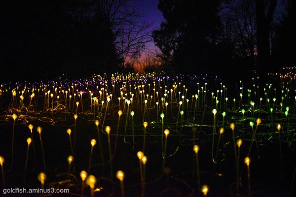 Winter Illuminations vi - Field of Light