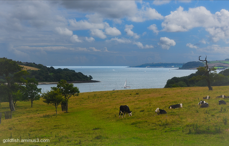 Trelissick House View iii