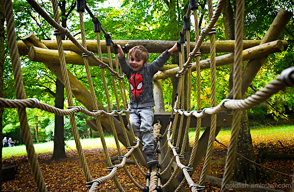 Woodland Play @ Cotehele