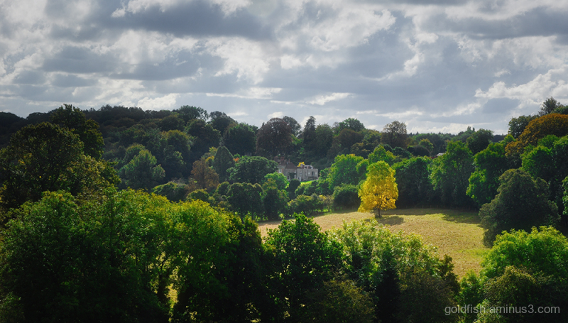 View From Greys Court