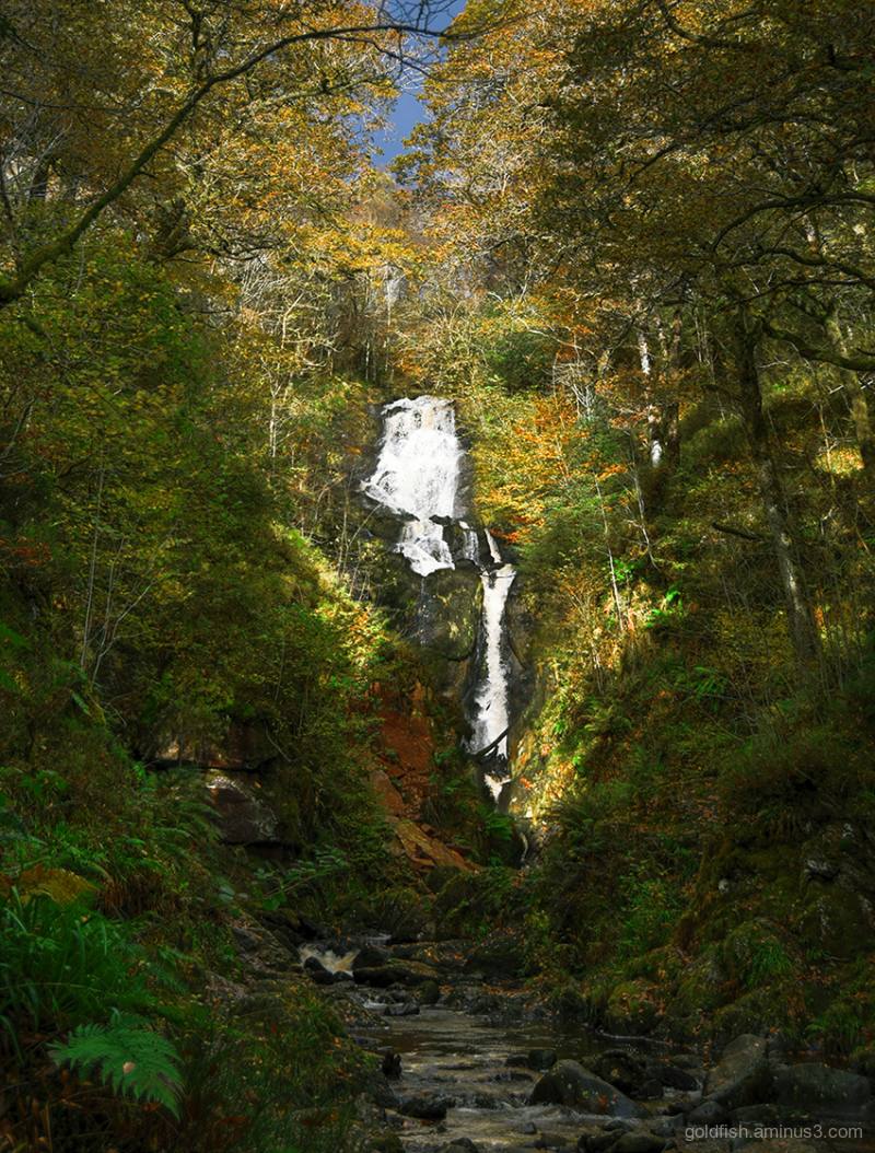 Woodland Waterfall