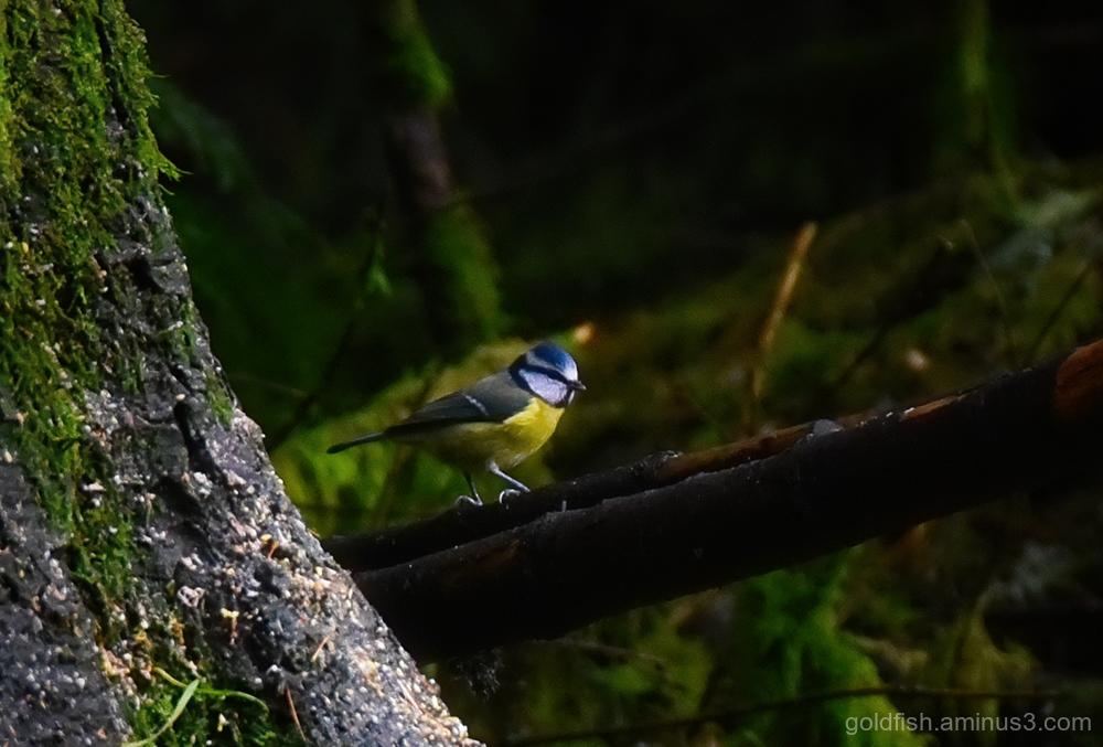 Woodland Wildlife