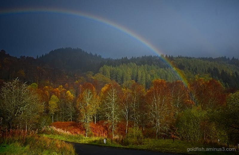 Woodland Rainbow