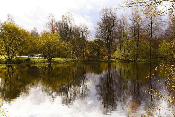 Woodland Water ii