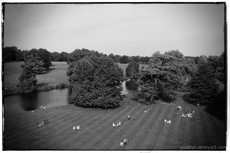 Garden View ii