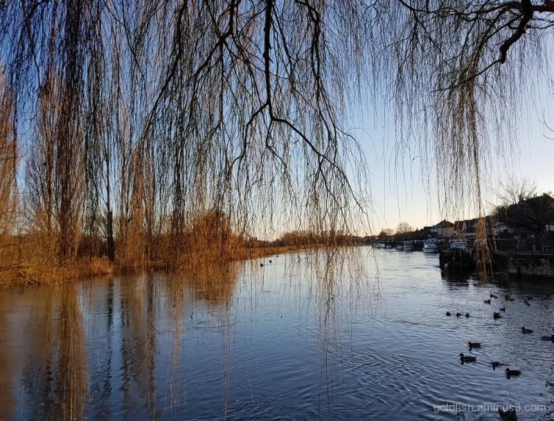 River Thames ii