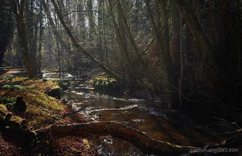 River Lambourn ii