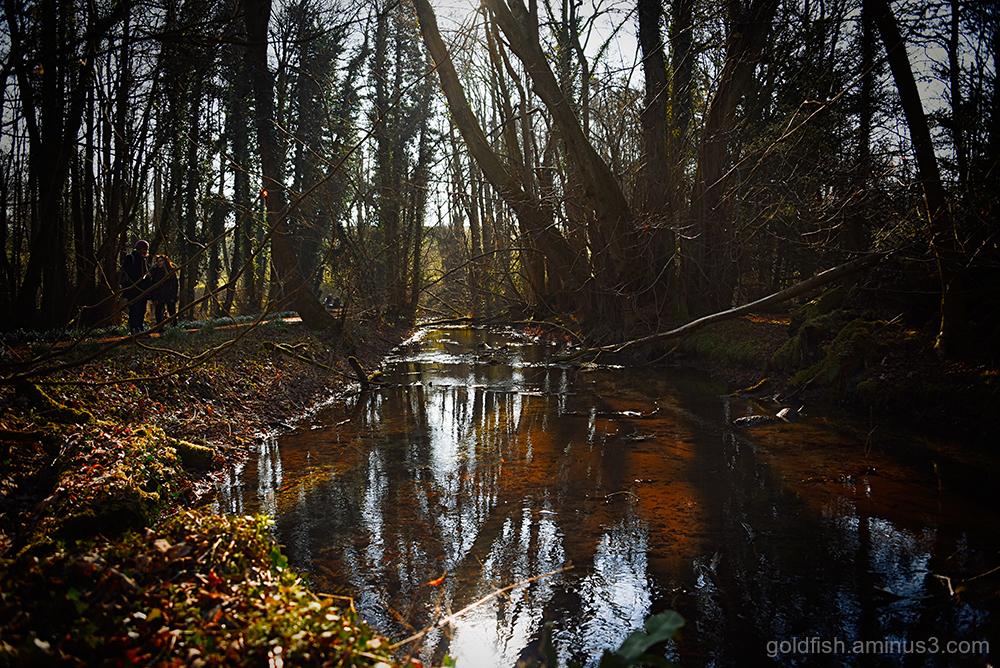 River Lambourn iii